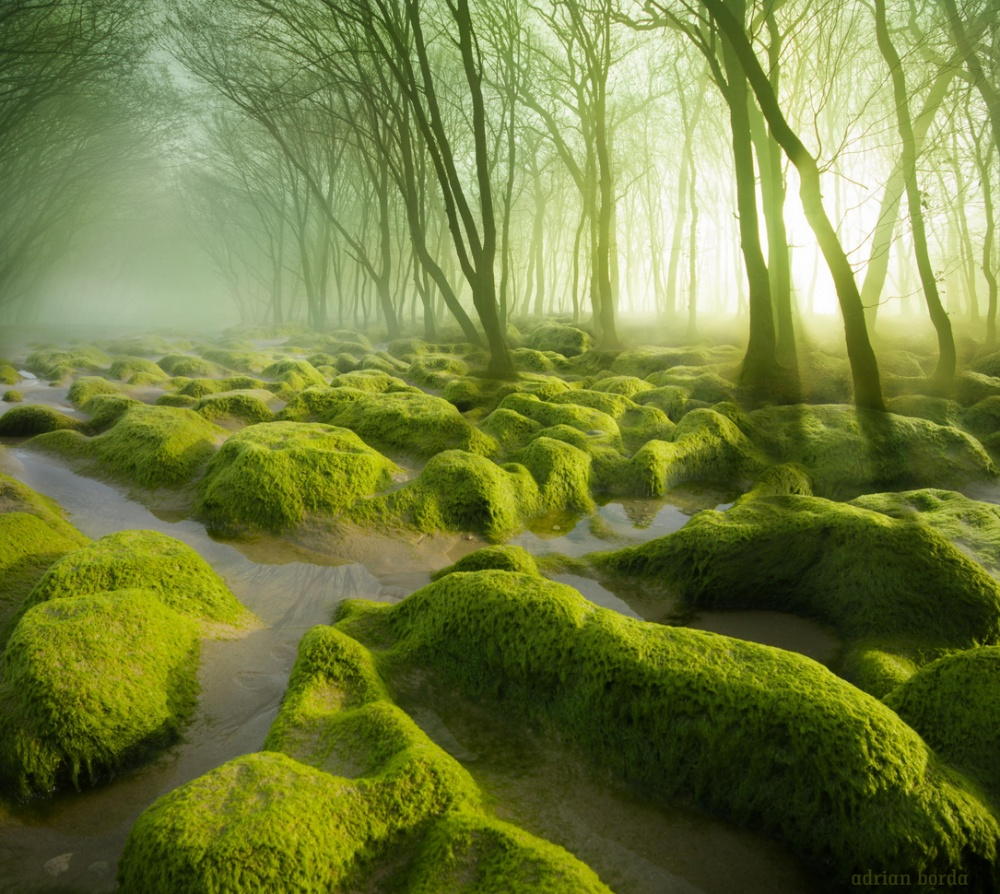 A marsh covered with moss. by Adrian Borda